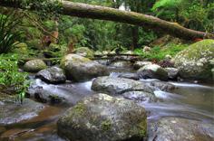 Ballina hinterland rainforest